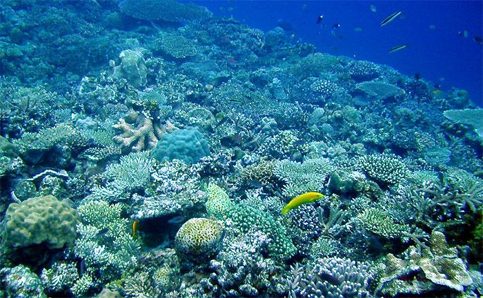 サンゴは動物