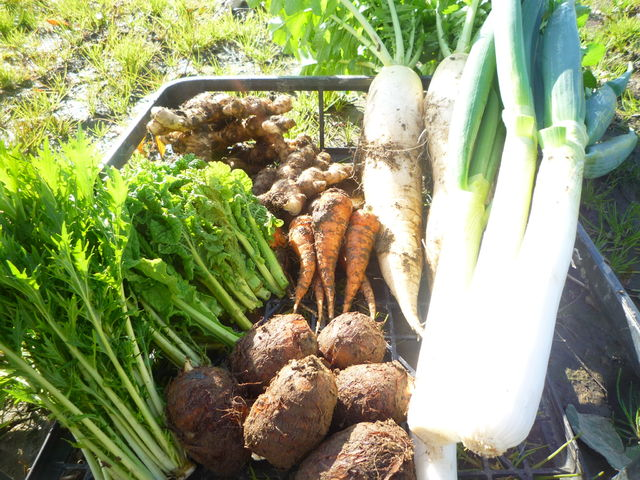 samson's lovely farmの野菜たち