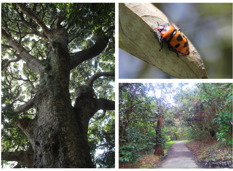 樹齢数百年の老木から珍しい昆虫まで