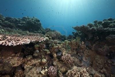 サンゴ礁は地形の名前